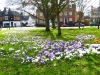 Springtime on Winchmore Hill Green